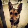 Contra más corro, más me enfado – Adiestramiento canino Valencia peleas perros