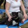 CONEXIÓN ESPIRITUAL – Curso meditación con perro y educación canina