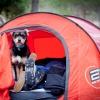 Calendario actividades con perro y curso de adiestramiento canino 2018