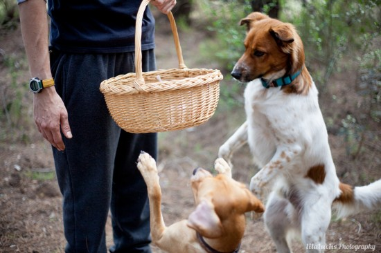 Cachorro valencia