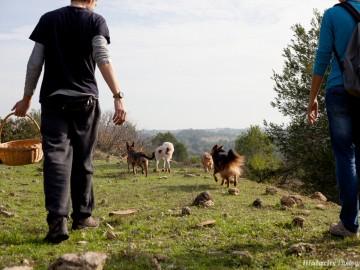 Educación canina en valencia