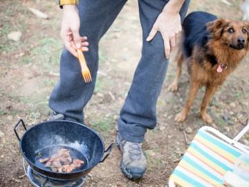 Educador canino en valencia