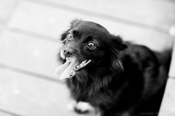 adiestramiento-canino-grupo-2014-lobo-descafeinado