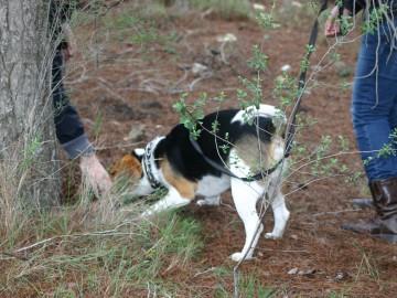 educador canino valencia