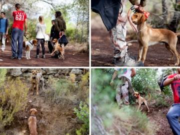 curso de educación canina Valencia