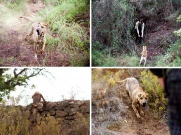 educación canina valencia (2)