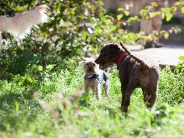 Solución peleas de perros