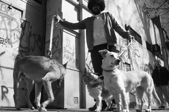vacaciones con perro lobo descafeinado (4)
