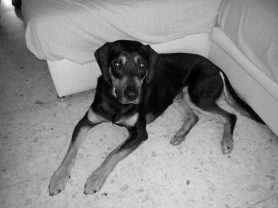 Educación canina, Alacuás, perro, ladridos, vecinos