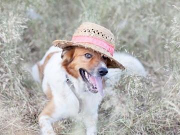vacaciones con perro lobo descafeinado (1)