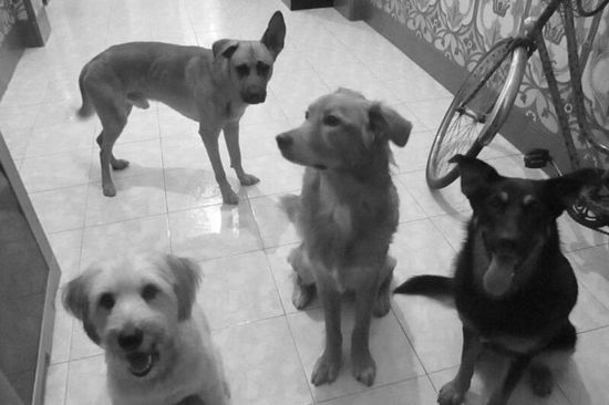 Pelas entre perros, ladridos, solución a problemas