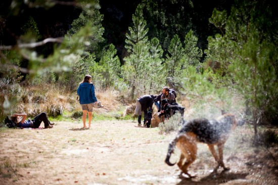 curso de perros