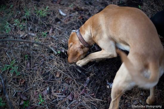 curso adiestramiento búsqueda con perro rebollones Lobo descafeinado (4)