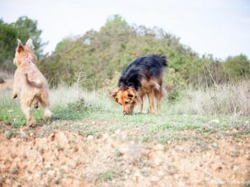 curso adiestramiento búsqueda con perro rebollones Lobo descafeinado (1)