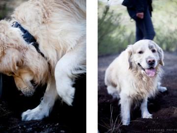 curso adiestramiento búsqueda con perro rebollones Lobo descafeinado (3)