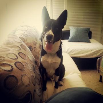 Agresividad  perros adiestrador canino valencia