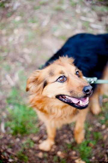 curso-adiestramiento-canino-asturias-lobo-descafeinado