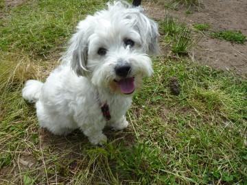 Curso adiestramiento canino Navelgas Asturias (1)
