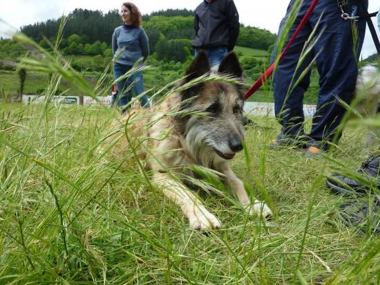 Curso adiestramiento canino Navelgas Asturias (4)
