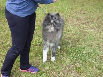 Curso adiestramiento canino Navelgas Asturias (3)