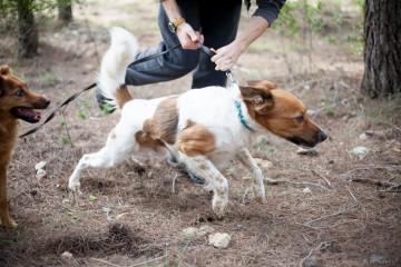 actividades con perro curso adiestramiento canino lobo descafeinado