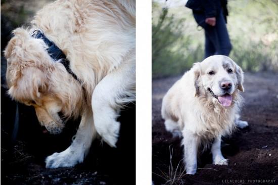 actividades-con-perro-curso-adiestramiento-canino-lobo-descafeinado