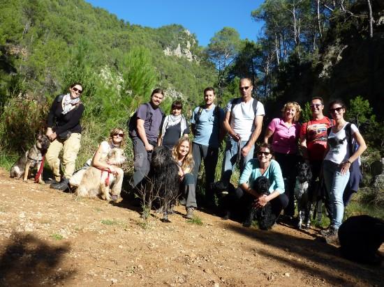 actividades con perro educación canina en grupo lobo descafeinado (2)