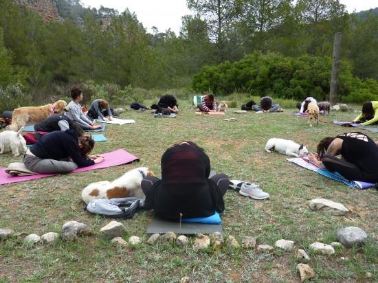 Actividades con perro en grupo - meditar y yoga