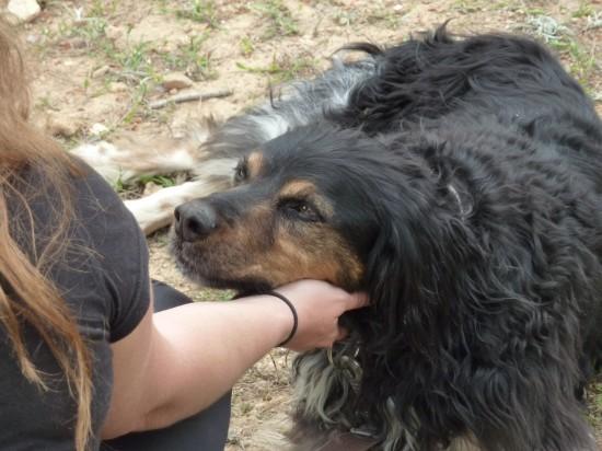curso-de-meditacion-con-perro-en-valencia (3)
