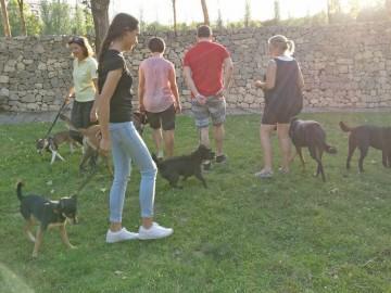 Actividades con perro y curso de adiestramiento canino 2017 (6)