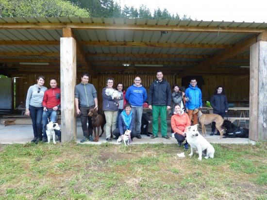 Actividades con perro y curso adiestramiento canino 2016 (6)