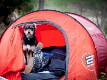 actividades-con-perro-curso-adiestramiento-canino-Valencia