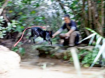 actividades-con-perro-curso-adiestramiento-canino-acuático
