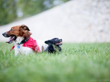 actividades-con-perro-curso adiestramiento-canino-grupo-socialización