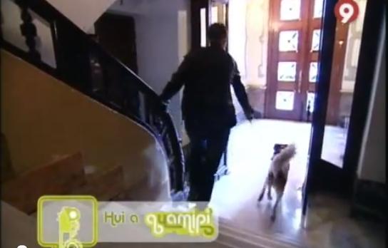 Adiestramiento canino a domicilio Valencia