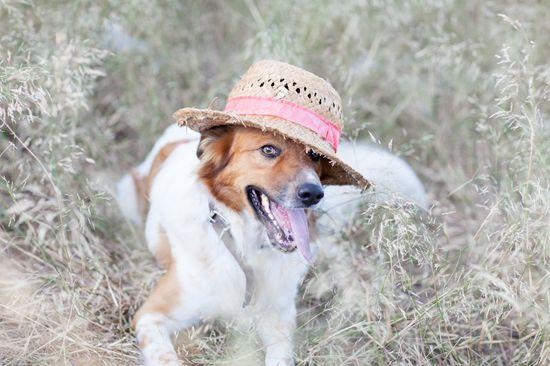 Vacaciones con perro – ¿Qué hacer?