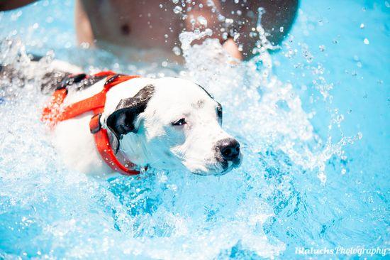 Taller perros y patos al agua realizado