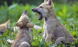 """Charla """"Cachorros al poder"""""""