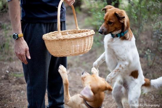 RESUMEN 2013 – Actividades con perro y curso adiestramiento canino