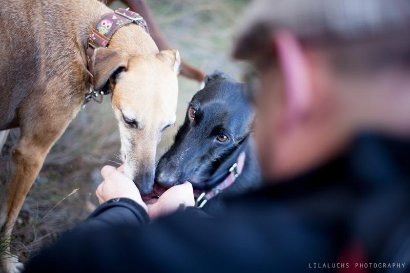 taller-educación-canina-en-la-naturaleza