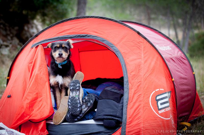 Acampada perruna Abril 2014: Personas-Perros-Naturaleza