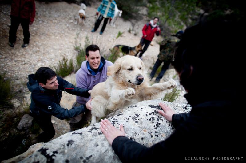 Lobo-Descafeinado-Adiestramiento-canino-educación-actividades-con-perro