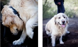 Curso adiestramiento busqueda con perro rebollones