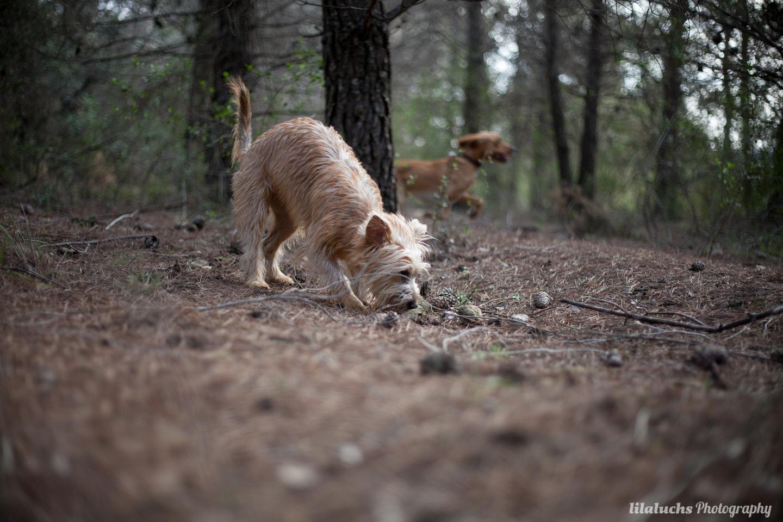 curso adiestramiento búsqueda con perro rebollones Lobo descafeinado (2)