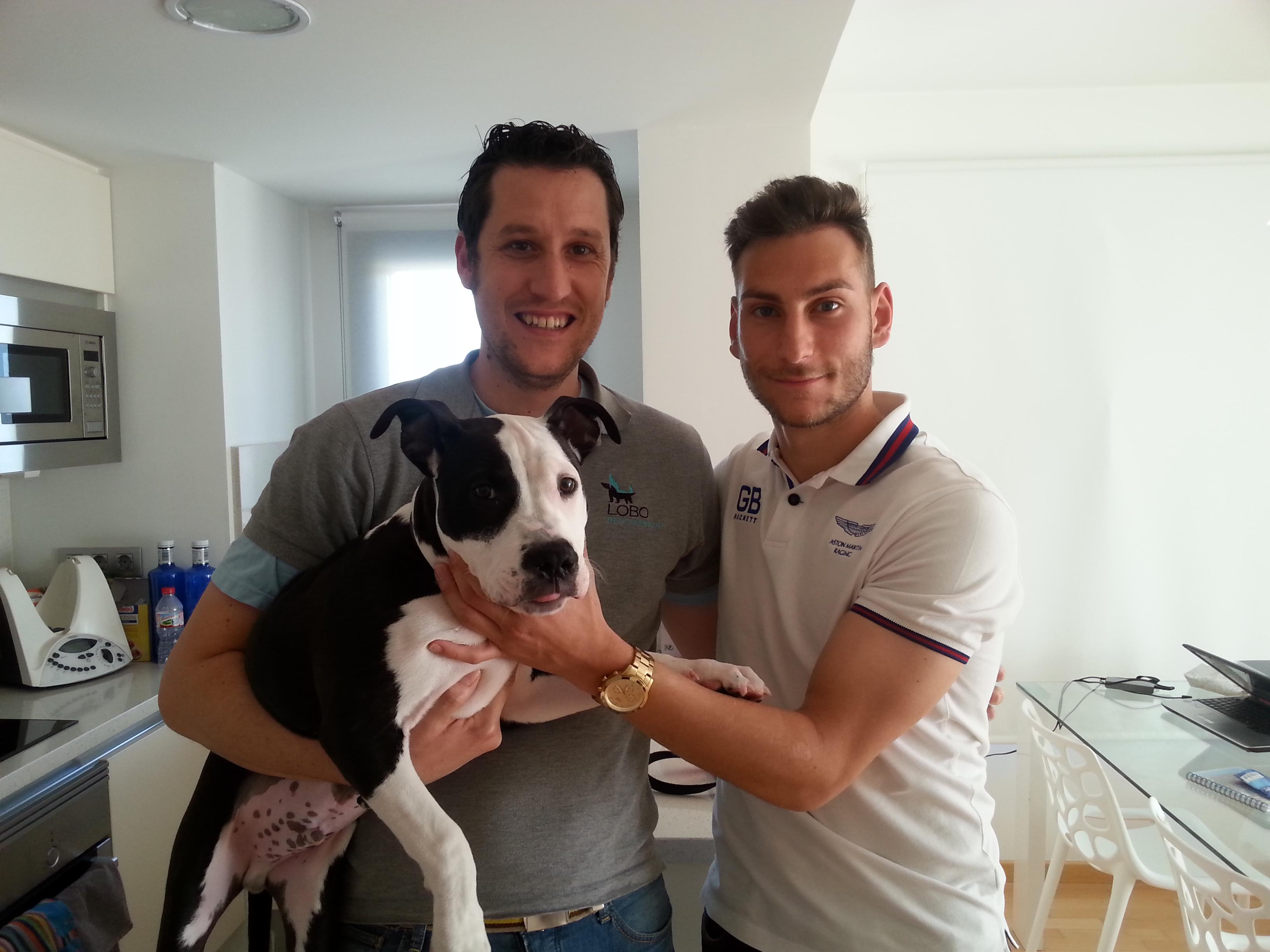 Macho Thor – Adiestramiento y educación a domicilio en Valencia – Cachorro