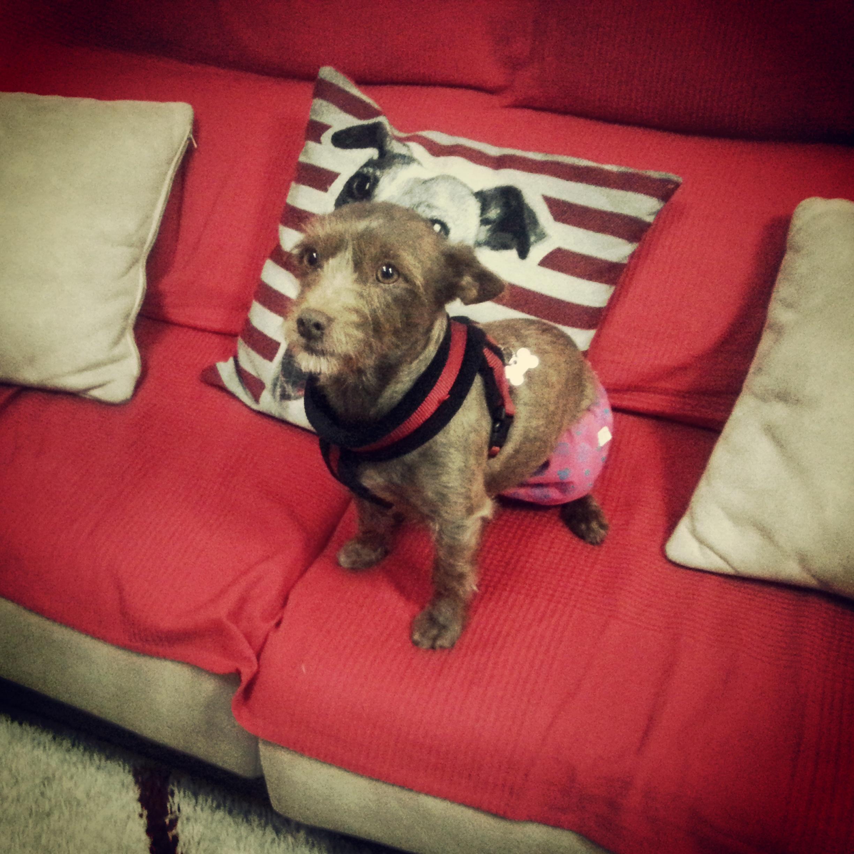 Cane, no estas sola – Adiestramiento canino perro solo casa