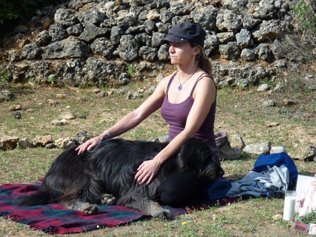 curso meditar y yoga con perro - Lobo descafeinado