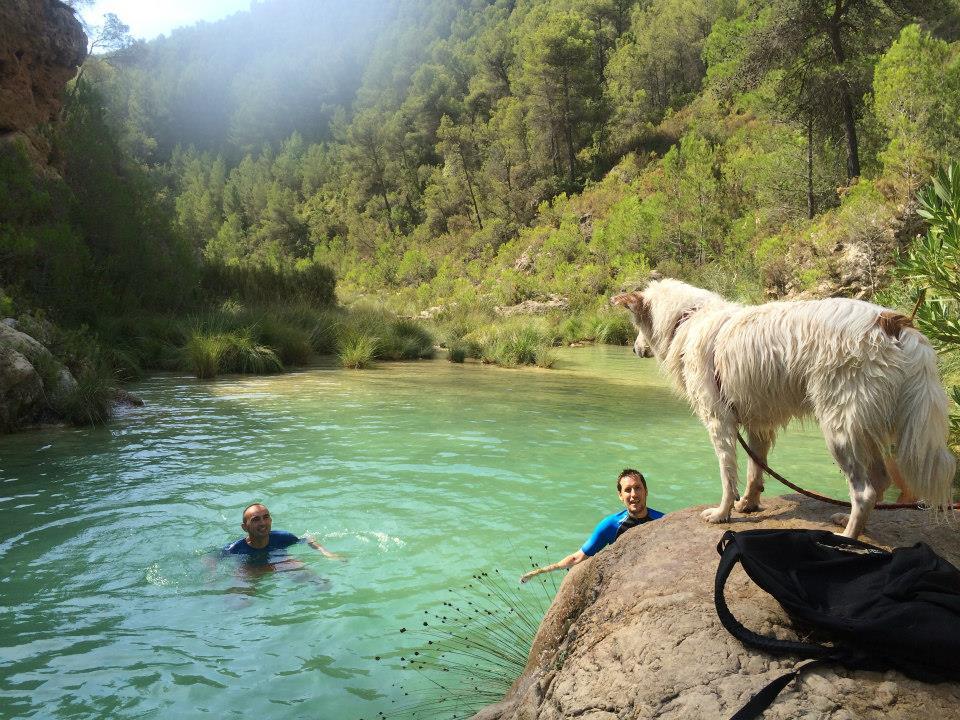adiestramiento-de-perros-en-agua-lobo-descafeinado