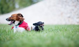 CIUDADANO PERRO – Curso adiestramiento canino en grupo Valencia