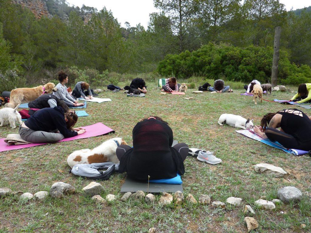 MEDITAR Y YOGA – Actividades con perros en grupo en Valencia